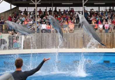 Gulfarium Marine Adventure Park Admission Tickets