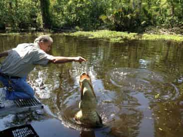 Swamp Tour New Orleans >> Manchac Swamp Tour With Optional Transportation From New Orleans By