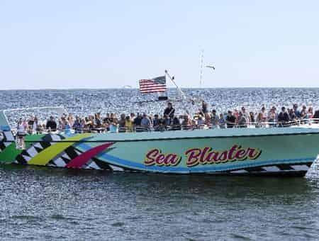 Dolphin Cruise Aboard the Original Sea Blaster