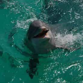 Miramar Beach (South Walton) Waverunner Dolphin Tour