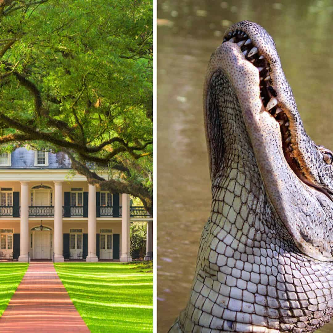 Oak Alley Plantation & Airboat Combo Tour with ...