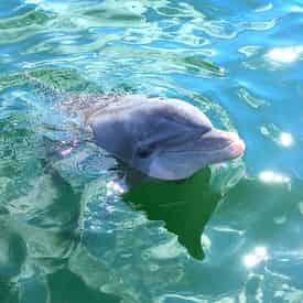 3 Hour Snorkel & Dolphin Experience with Wild Dolphin Tours