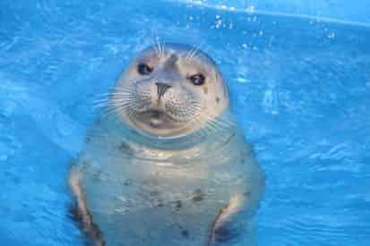 Harbor Seal Encounter at Gulf World Marine Park