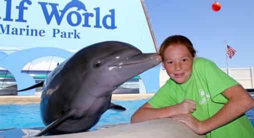 Bottlenose Dolphin Meet N Greet at Gulf World Marine Park