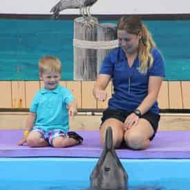 Rough-toothed Dolphin Meet N Greet at Gulf World Marine Park