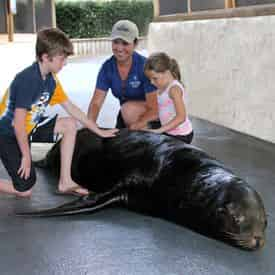 Sea Lion Meet N Greet at Gulf World Marine Park