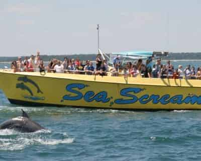 Sea Screamer Dolphin Cruise Myrtle Beach
