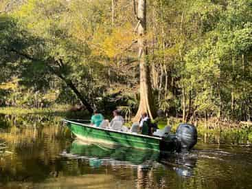 Small Boat Tour of Honey Island Swamp