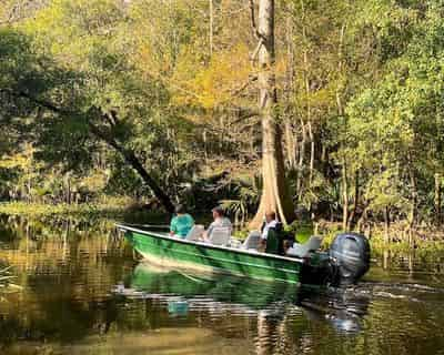 Small Boat Tour of Honey Island Swamp by Beyond the Bayou Tours