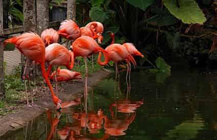 Flamingo Gardens Admission Tickets