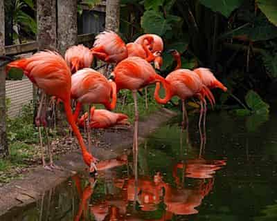 Tropical Botanical Garden & Everglades Wildlife Sanctuary at Flamingo Gardens