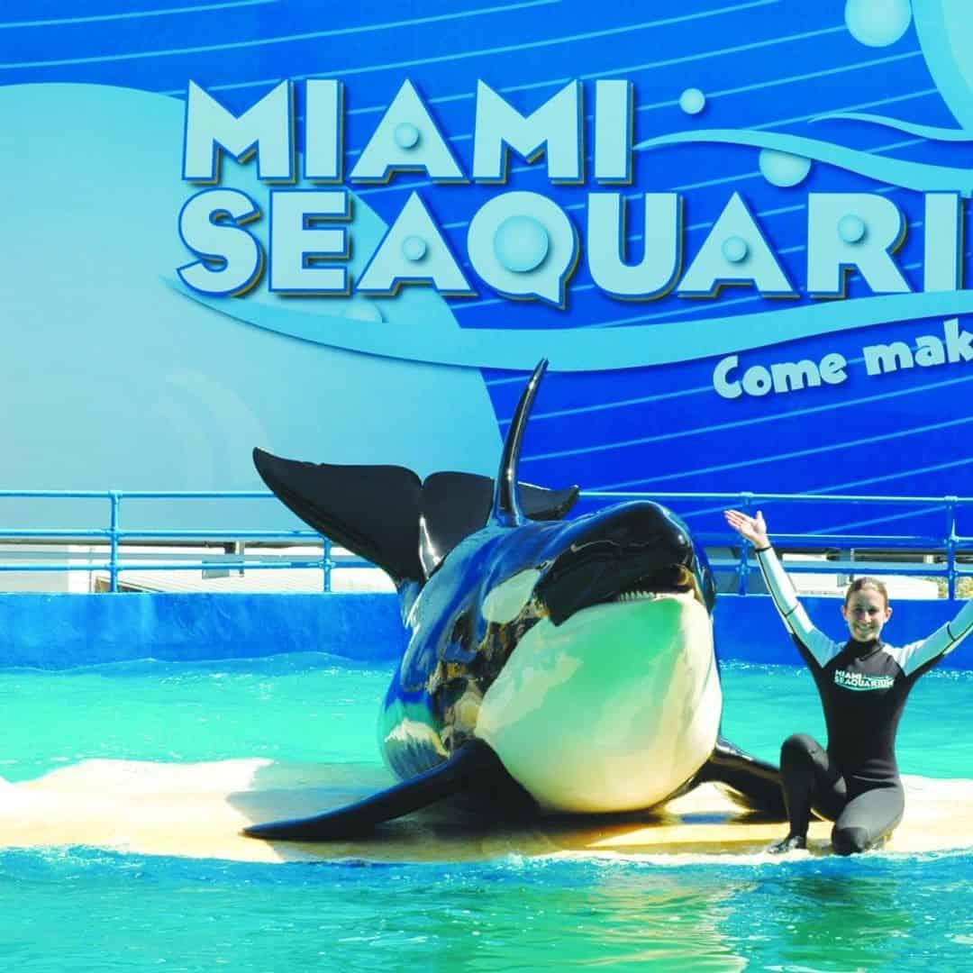 Miami Seaquarium Adventure with Transportation - TripShock!