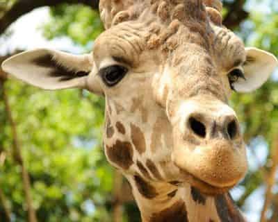 New Orleans Audubon Zoo Admission Ticket