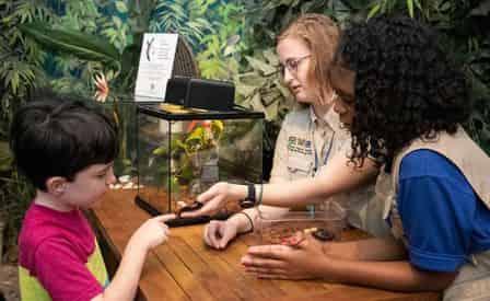New Orleans Audubon Butterfly Garden & Insectarium Admission Ticket