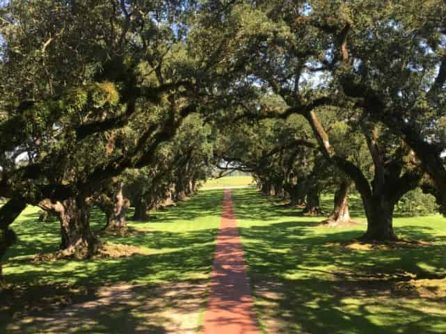 oak alley plantation tour oak trees on tour