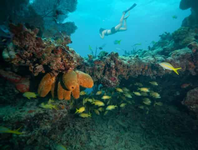 snorkeling at a coral reef in the florida keys