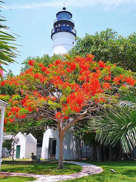 key west lighthouse with flowers blooming