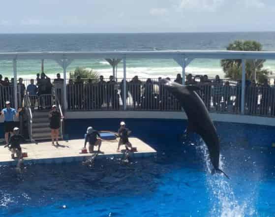 gulfarium dolphin show traveler story