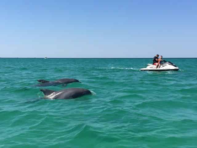 xtreme-h2o-dolphin-waverunner-tour