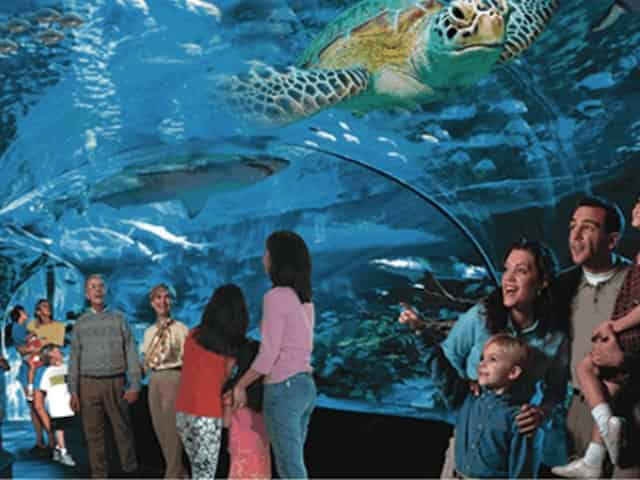 ripleys aquarium in myrtle beach, sc
