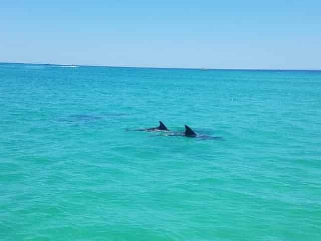 dolphins in clearwater, fl