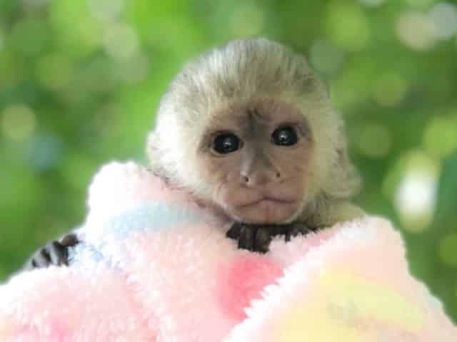 monkey at the alabama gulf coast zoo