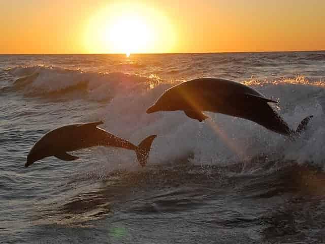 sunset cruise in gulf shores, alabama