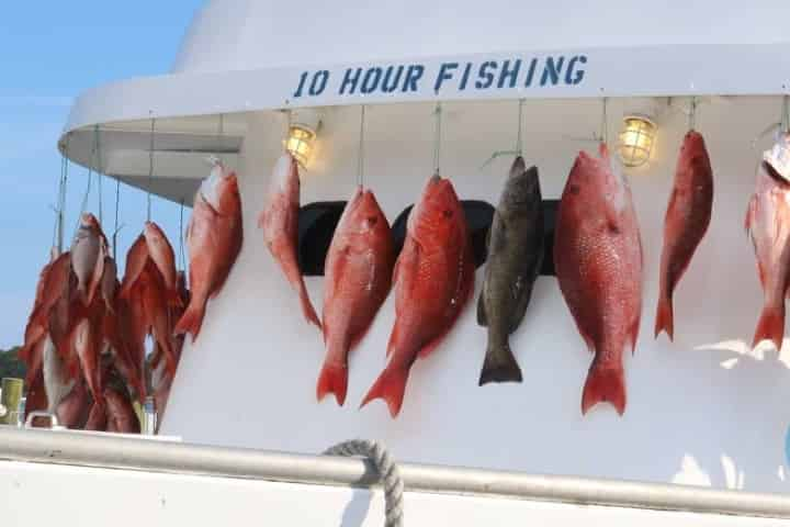 2020 Florida Red Snapper Season Guidelines