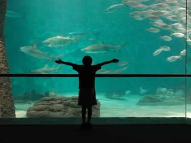 new orleans aquarium
