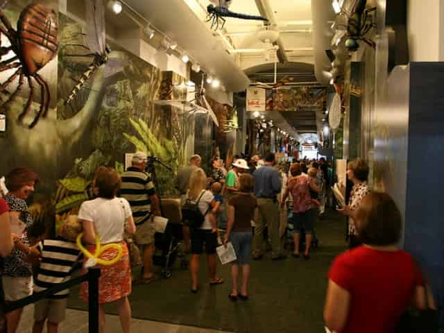 new orleans insectarium
