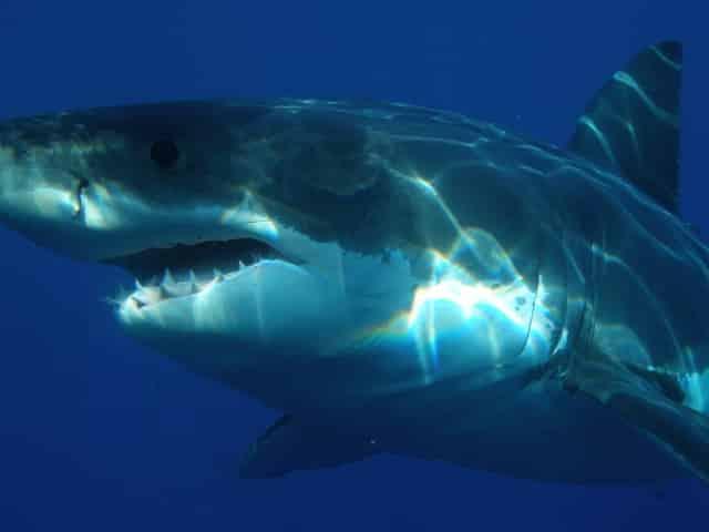 Jaws movie filmed in Destin, FL