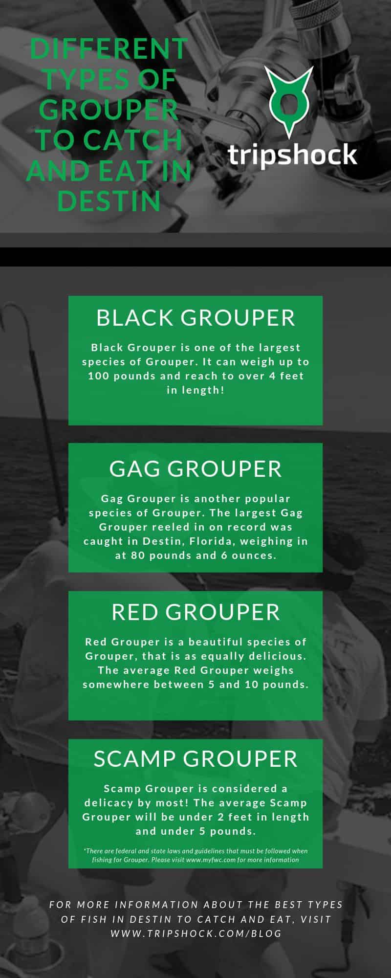 different types of grouper to catch and eat in destin