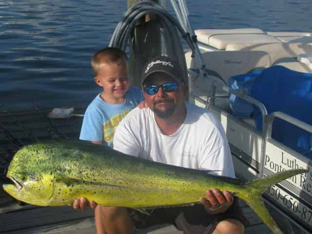 mahi mahi fishing on a destin fishing charter