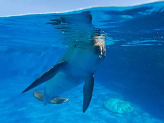 dolphin show in fort walton beach