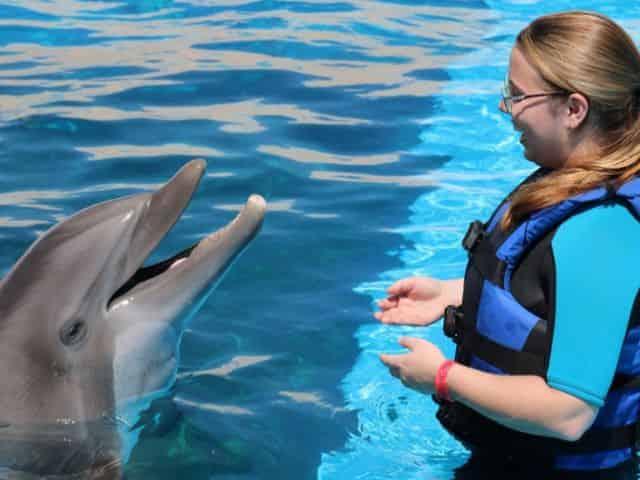 gulfarium marine park animal encounter