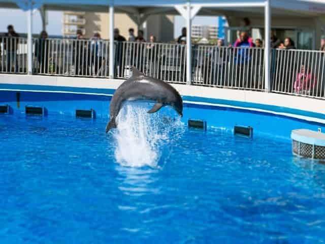 gulfarium marine adventure park shows
