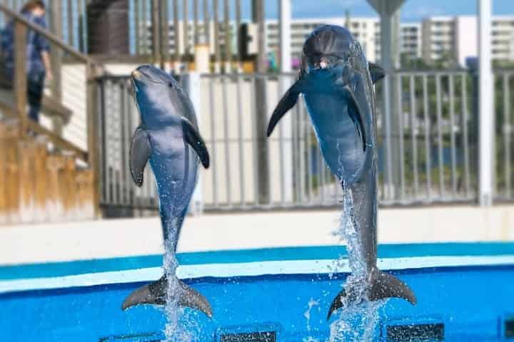Gulfarium Animals and Exhibits; PLUS 5 Fun Reasons to Visit!