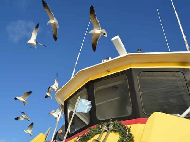seagulls flying over a dolphin cruise
