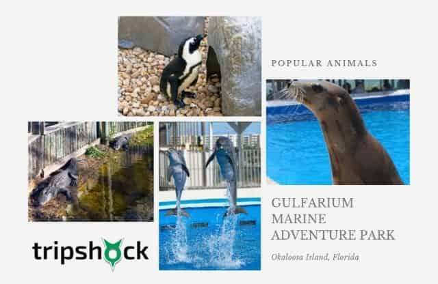 gulfarium popular animals