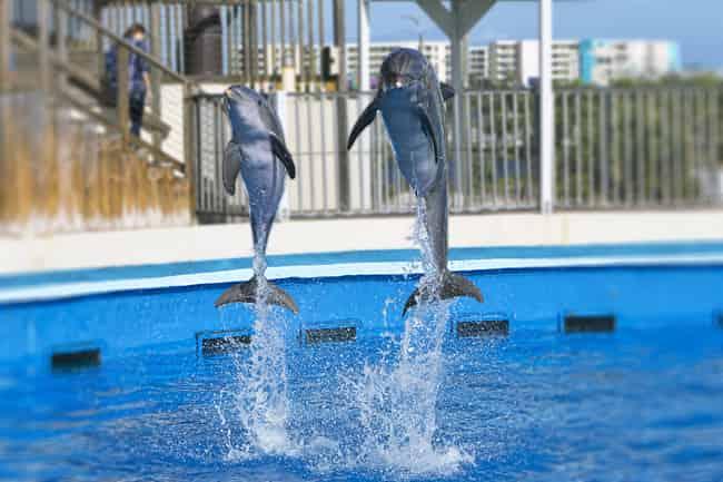 dolphin show at the gulfarium on okaloosa island