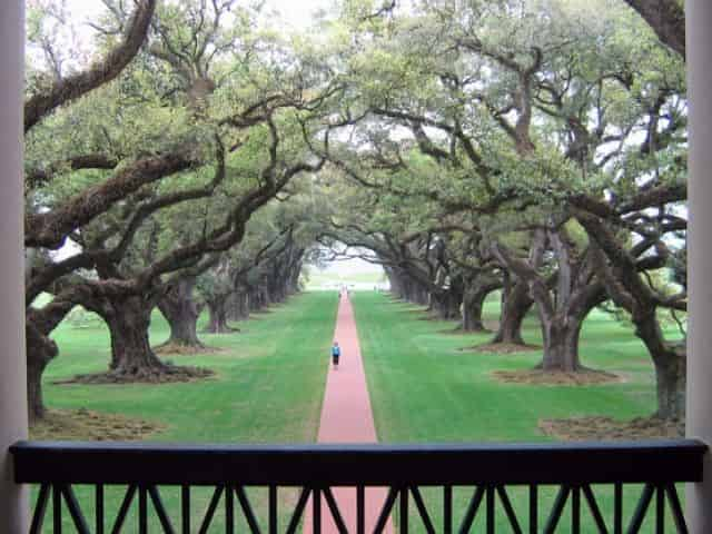 view from second floor of oak alley plantation