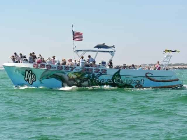 seaquest dolphin sightseeing cruise