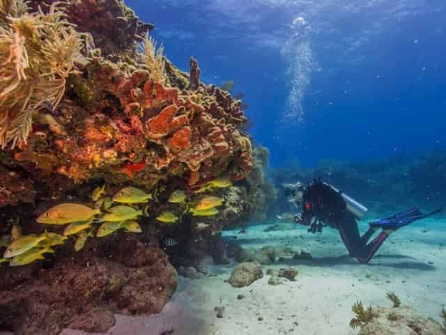 scuba diving biscayne national park