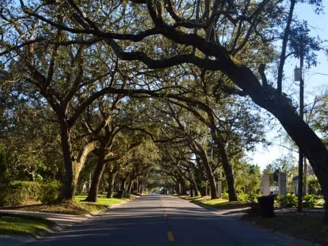 12th Avenue Tree Tunnel in Pensacola, FL