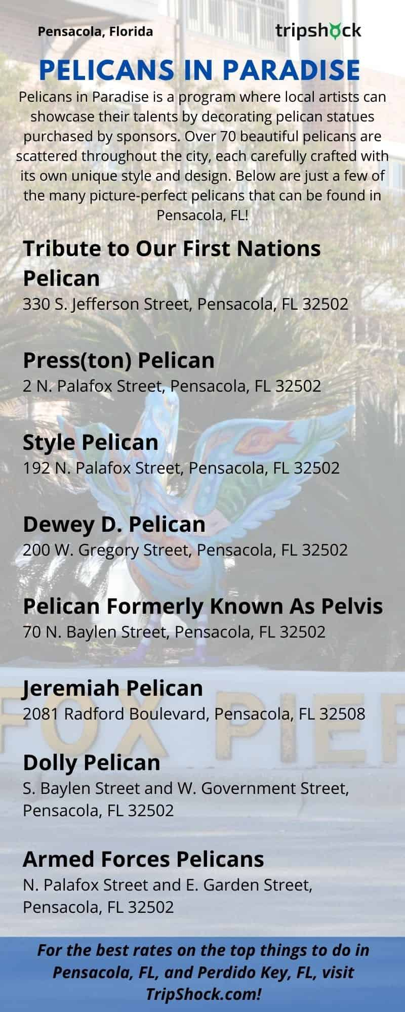 Where to Find Pelicans in Paradise in Pensacola