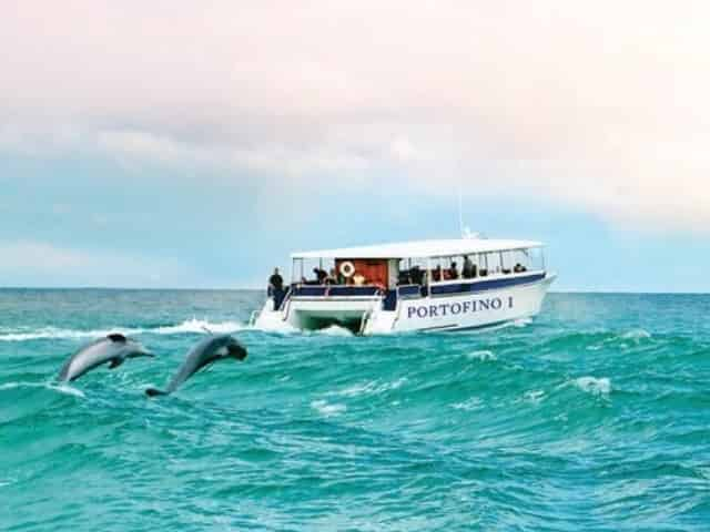 Best Time to Take a Dolphin Cruise [And How to Book Tickets]