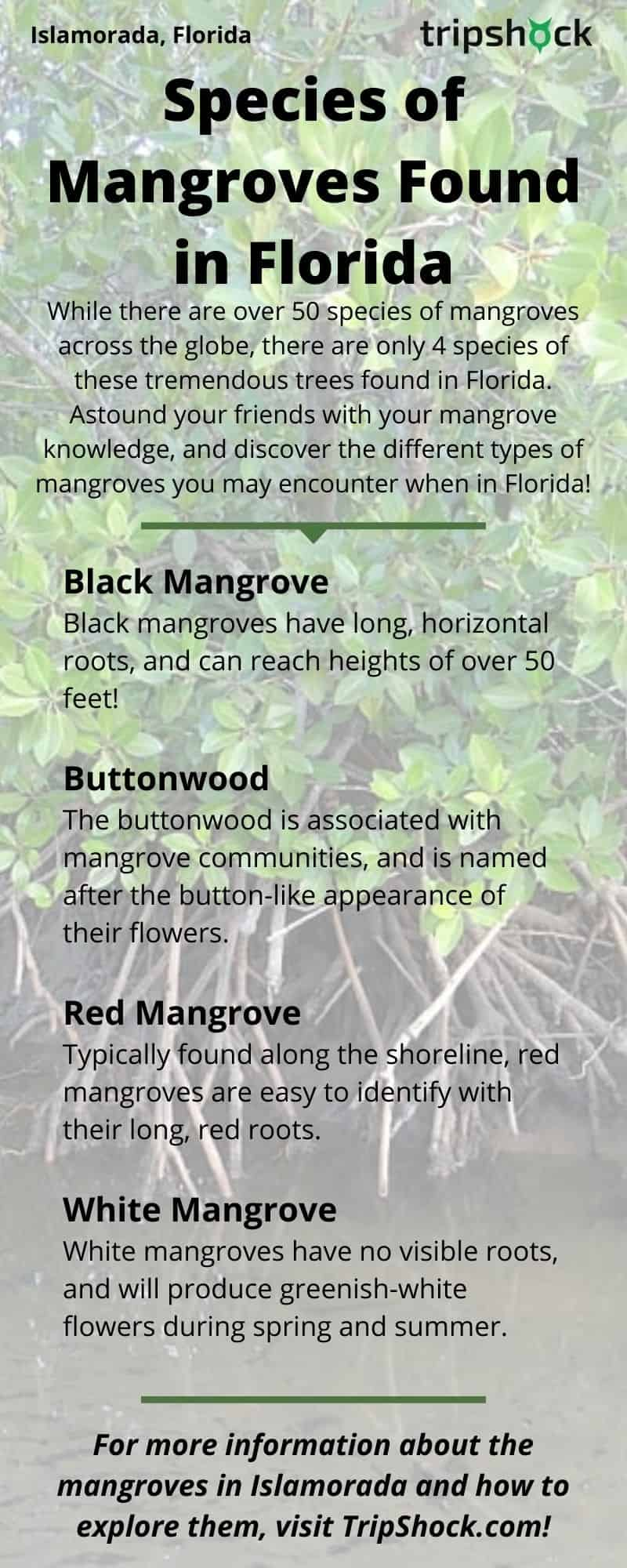 Mangroves of Islamorada, FL - 5 Best Ways to Explore