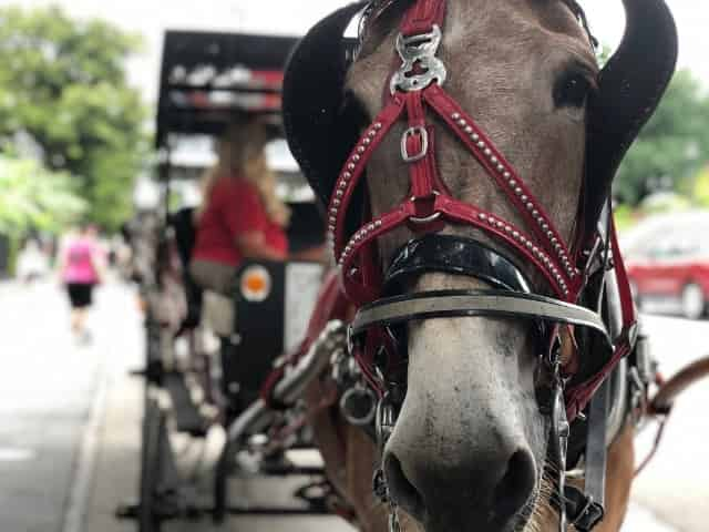 carriage tour with royal carriages