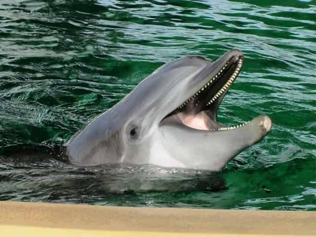 happy dolphin at the Clearwater Marine Aquarium