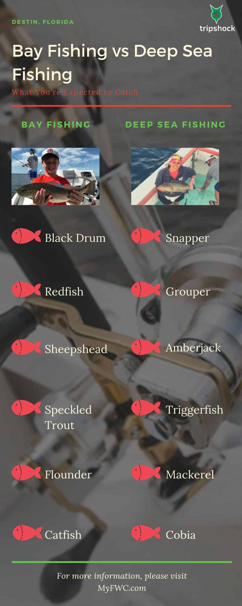 bay fishing vs deep sea fishing graphic